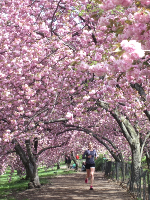 The Cherry Trees Behind Me
