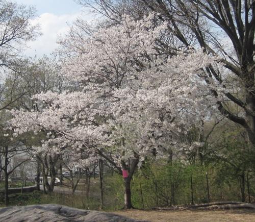 Riverside Park, New York City, April 21, 2014