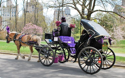 2-horse-and-carriage-tour_650